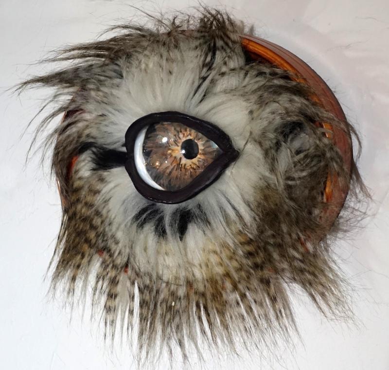 Fluffy Oval Eye Why