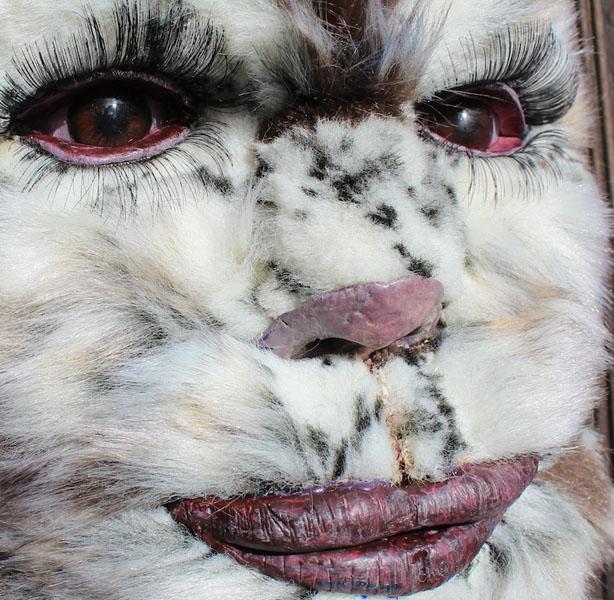 furryfacedetailsmall001